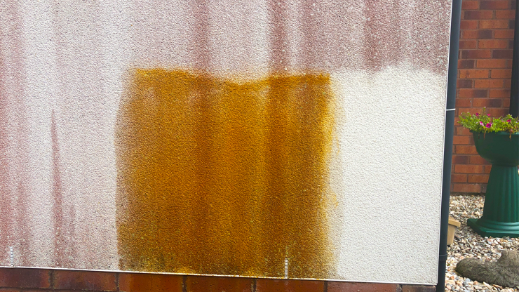 Red Algae showing cleaning patch